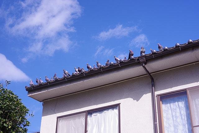 ハトやカラス、スズメ、ムクドリなどの被害対策