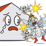 シロアリの女王の生体と家屋の被害を防ぐポイント