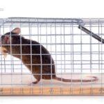 ネズミは侵入経路が多い!探し方と効果的な対策方法