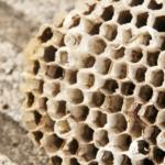 スズメバチに要注意!巣をつくりやすい場所や時期を知っておこう!