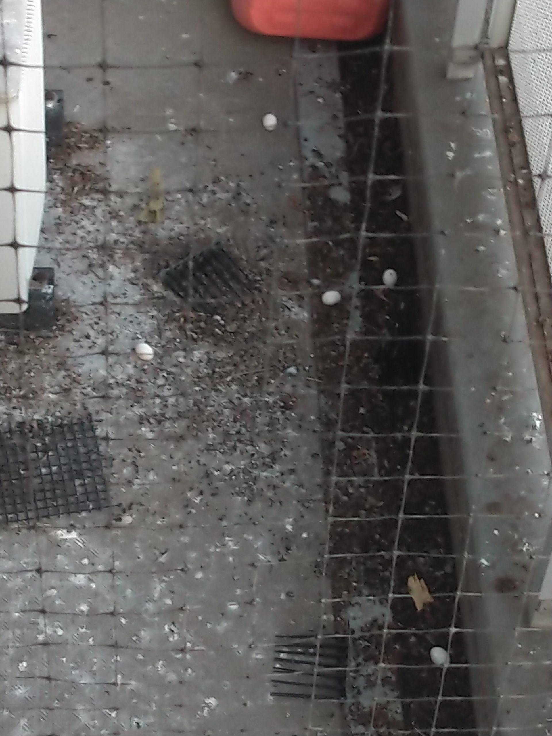 千葉県柏市のE様のハト糞清掃:施工前
