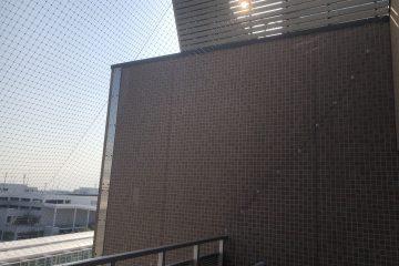 千葉県八千代市のTビルのハト駆除