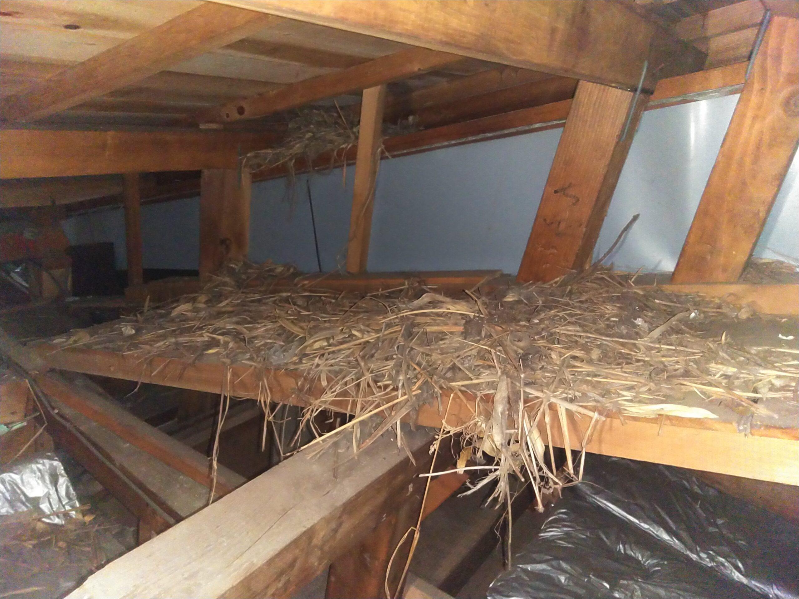 千葉県柏市のO様のムクドリ害鳥駆除:施工前