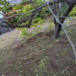 毛虫発生!お庭でガーデニングや家庭菜園での対策!毛虫退治方法は?