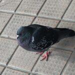 千葉県船橋市内のムクドリ・ハトによる被害!注意すべき害虫・害鳥被害の実態