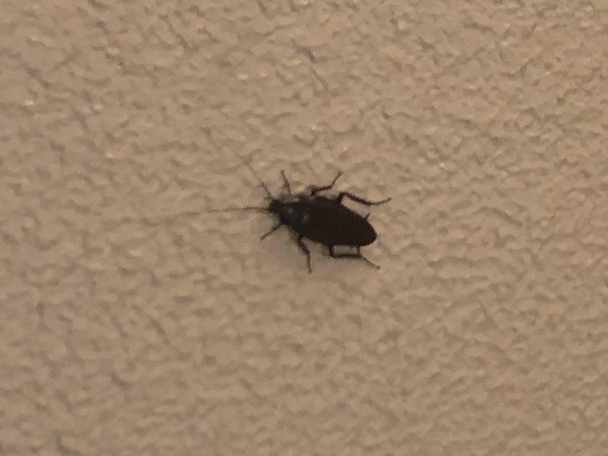 千葉県松戸市のクロゴキブリの駆除:施工前