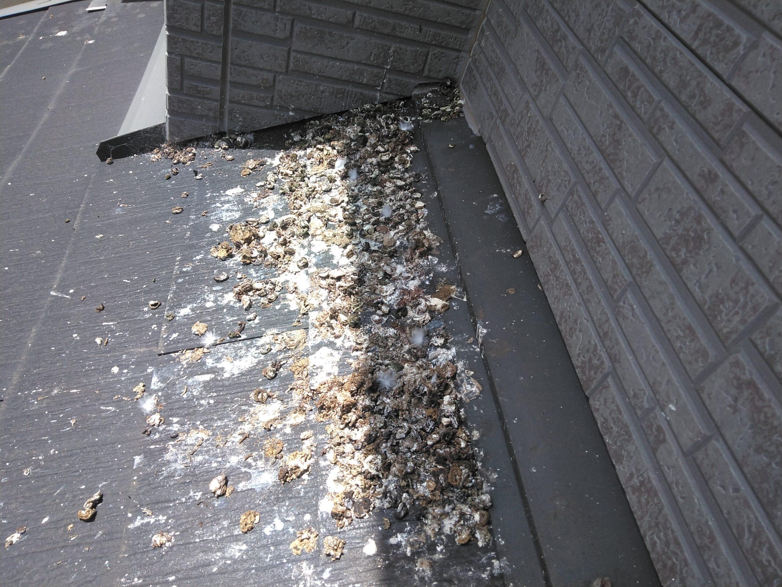 千葉県船橋市のk様のハト駆除:施工前
