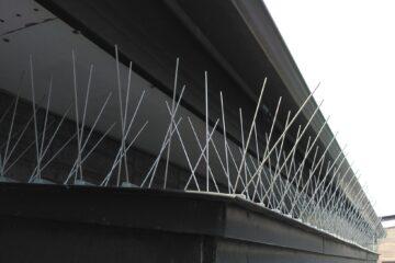 千葉県船橋市のk様のハト駆除