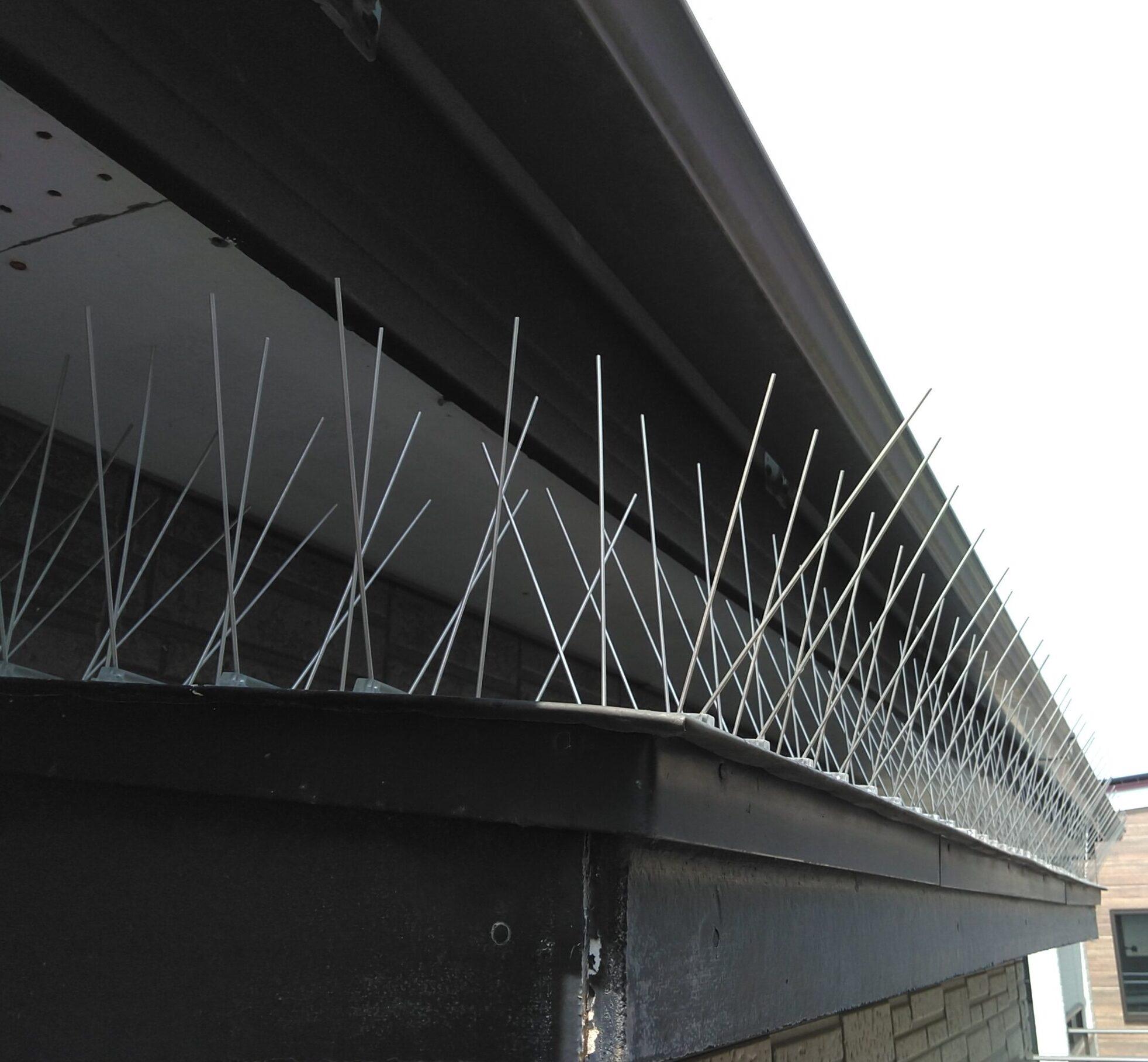 千葉県船橋市のk様のハト駆除:施工後