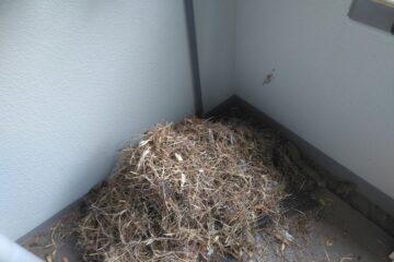 千葉県千葉市のN様の害鳥駆除