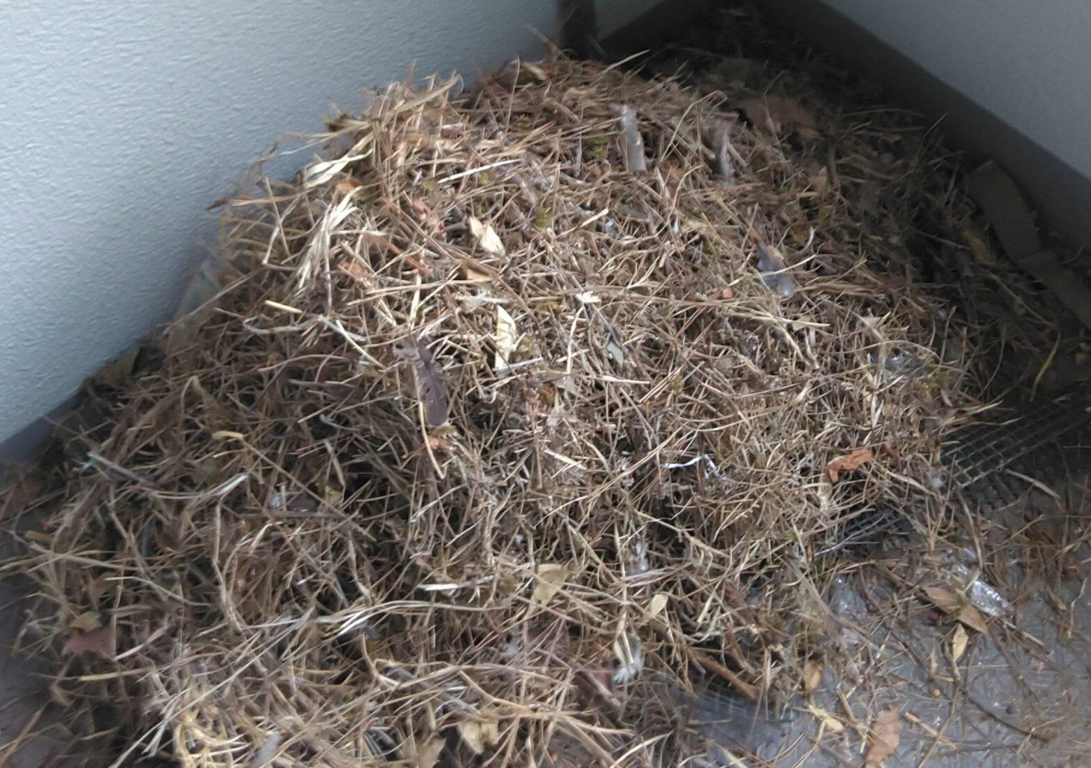 千葉県千葉市のN様の害鳥駆除:施工後