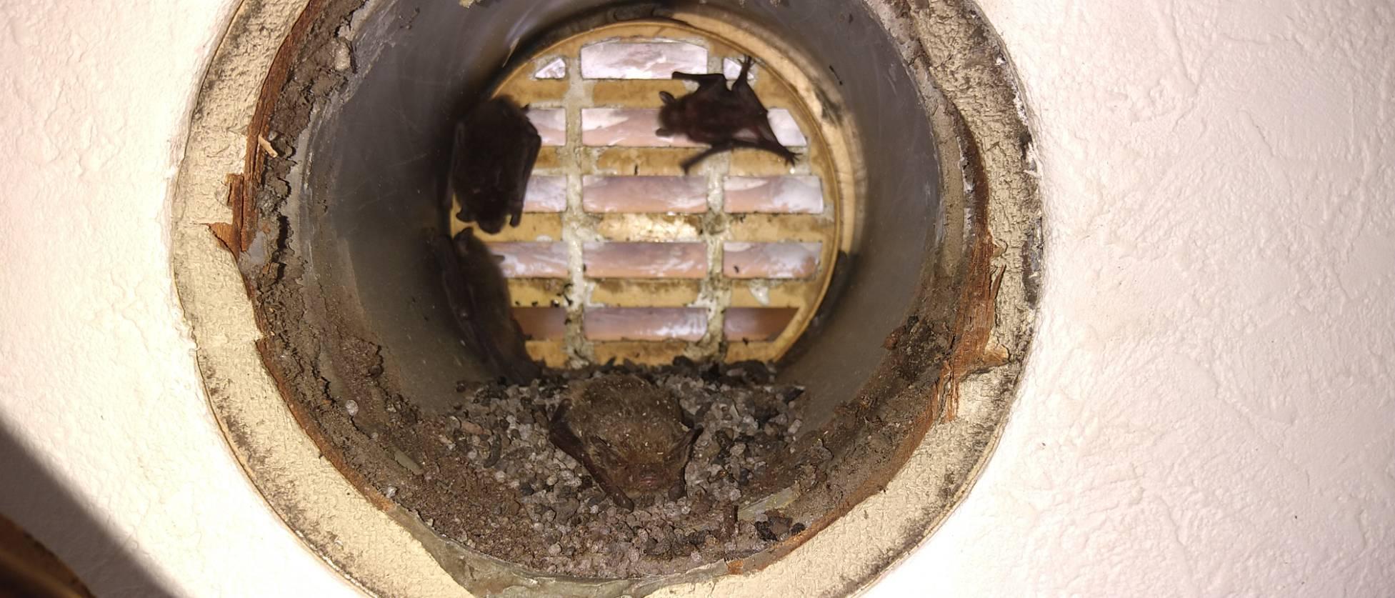 千葉県柏市のK様のコウモリ駆除:施工前