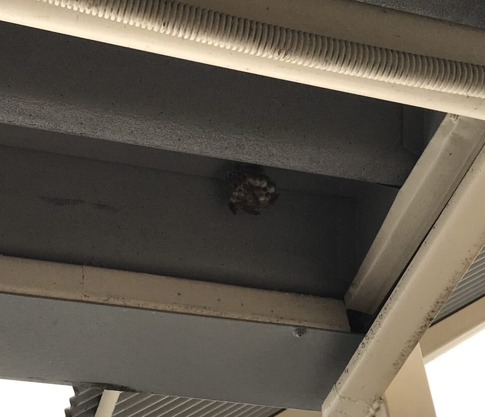 東京都江戸川区のT様のハチ駆除:施工前