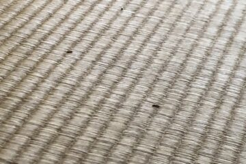 千葉県船橋市のT様の害虫駆除