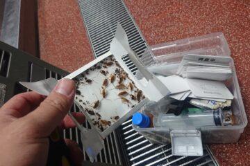 千葉県船橋市の飲食店様のゴキブリ駆除