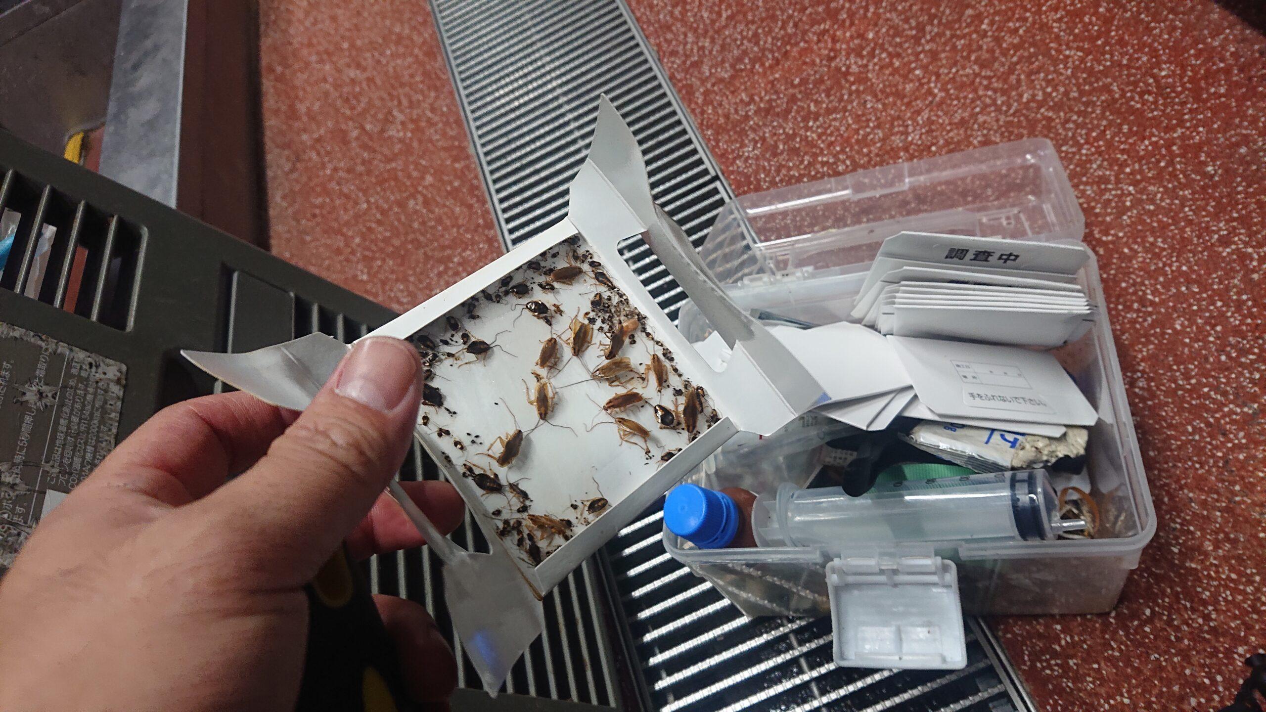 千葉県船橋市の飲食店様のゴキブリ駆除:施工後