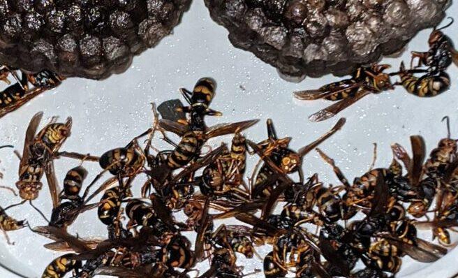 千葉県印西市のK様のハチ駆除:施工後