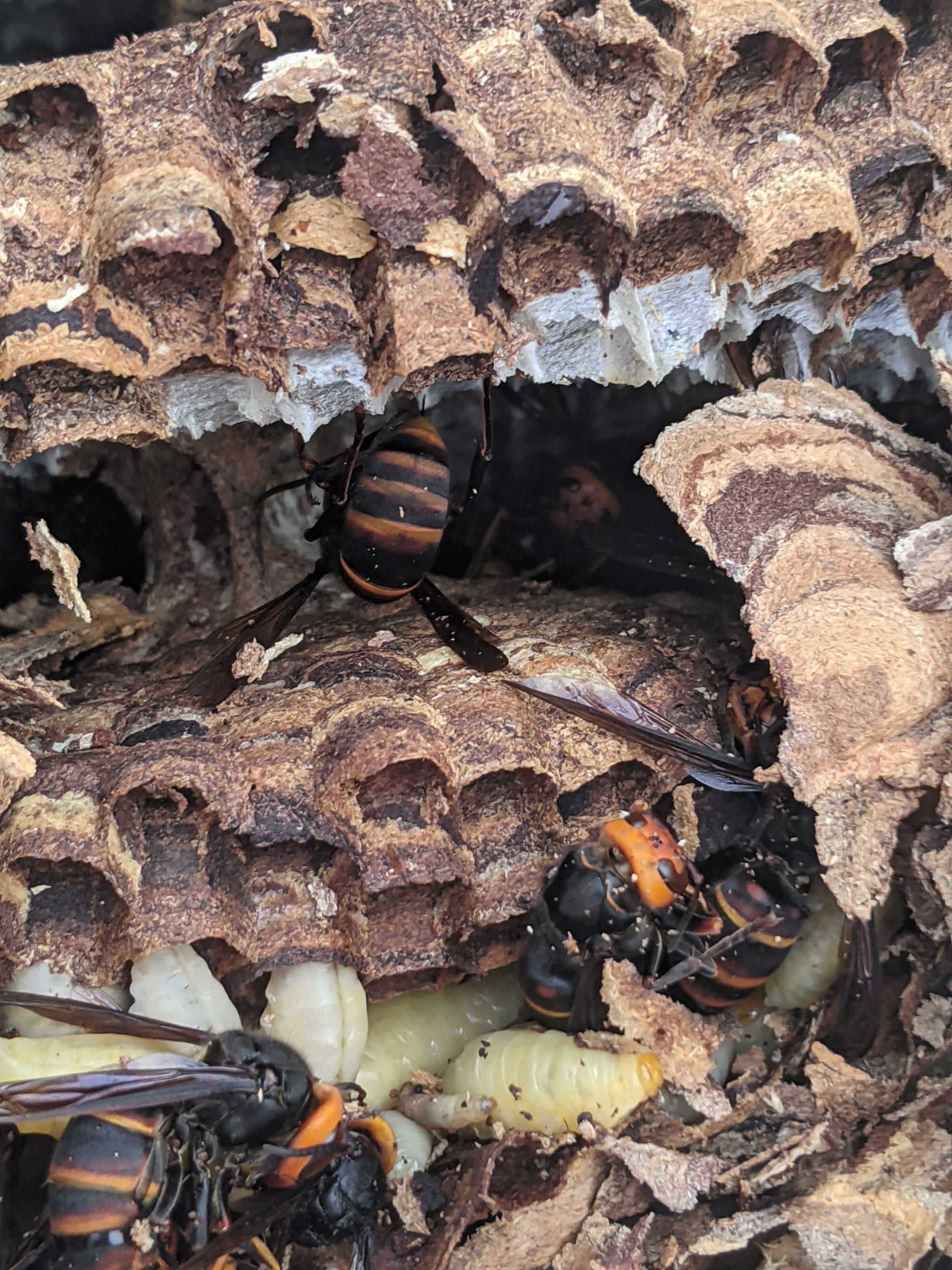 ハチ被害にお困りの方へ