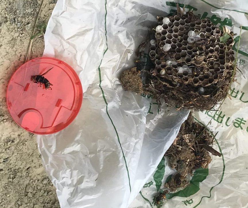 茨城県のK様のスズメバチ駆除:施工後