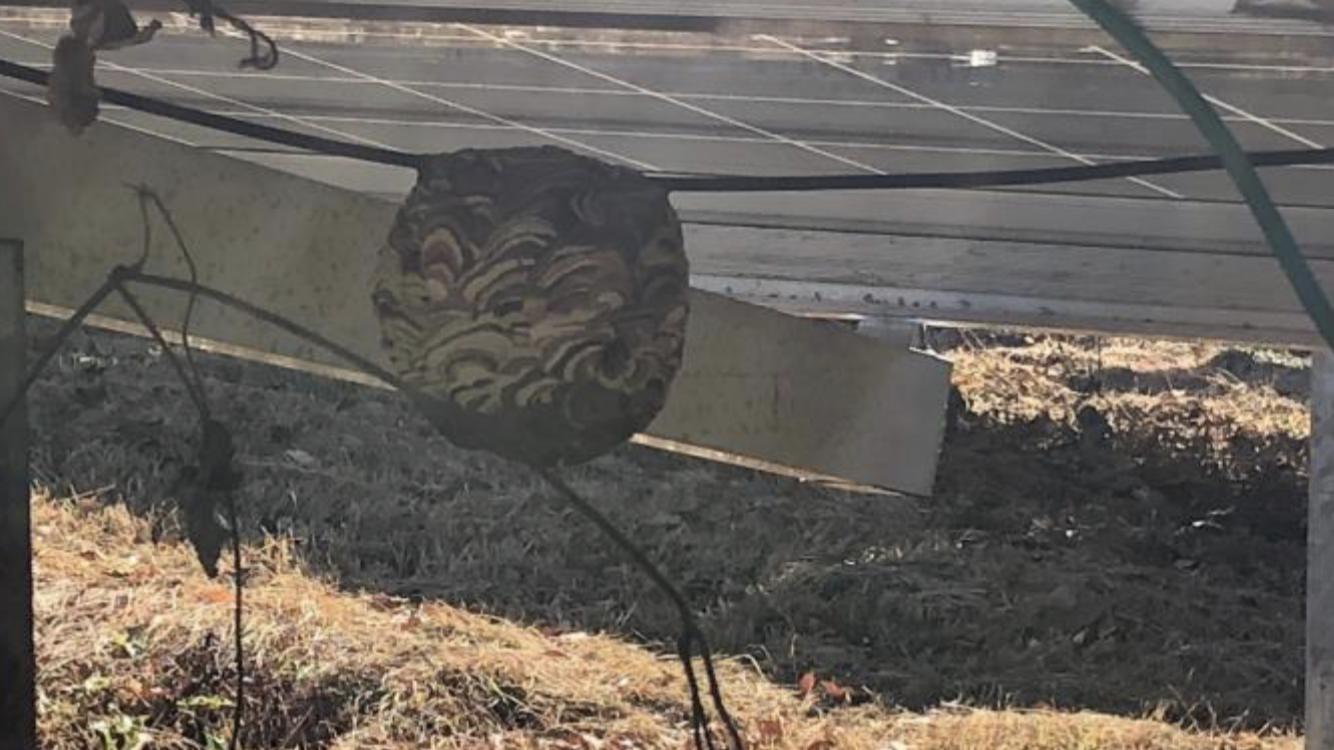 千葉県成田市のスズメバチの駆除:施工前