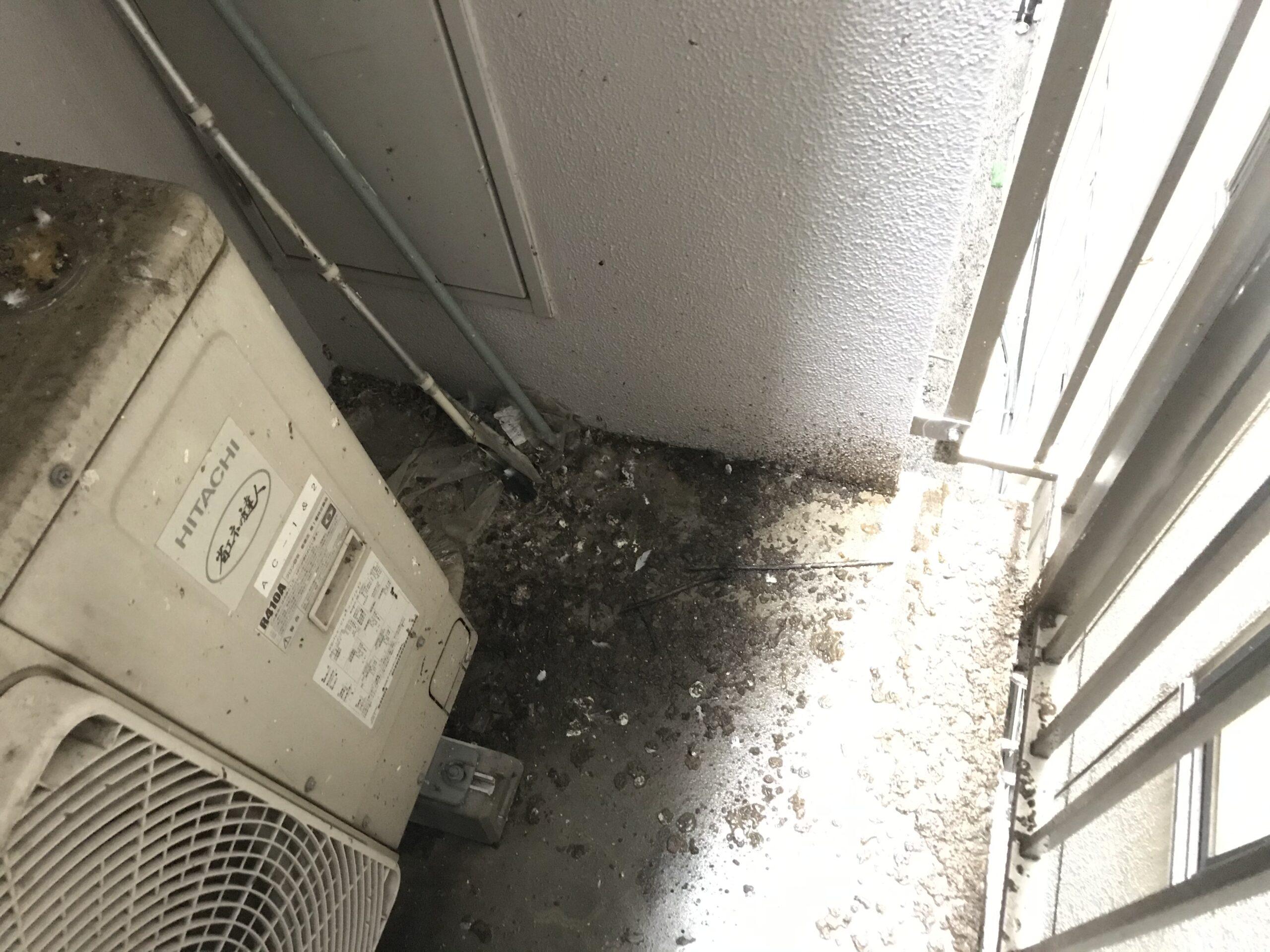 千葉県船橋市のA様のハト駆除:施工前
