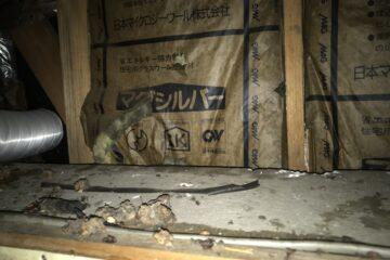 東京都豊島区のハクビシンとネズミの駆除