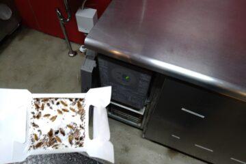 東京都足立区の飲食店様のゴキブリ駆除