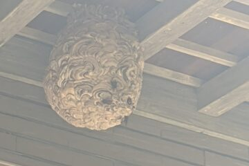 千葉県船橋市のk様のスズメバチ駆除