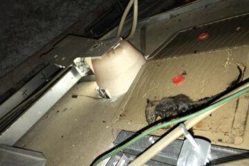 千葉県船橋市のⅯ様のネズミ駆除