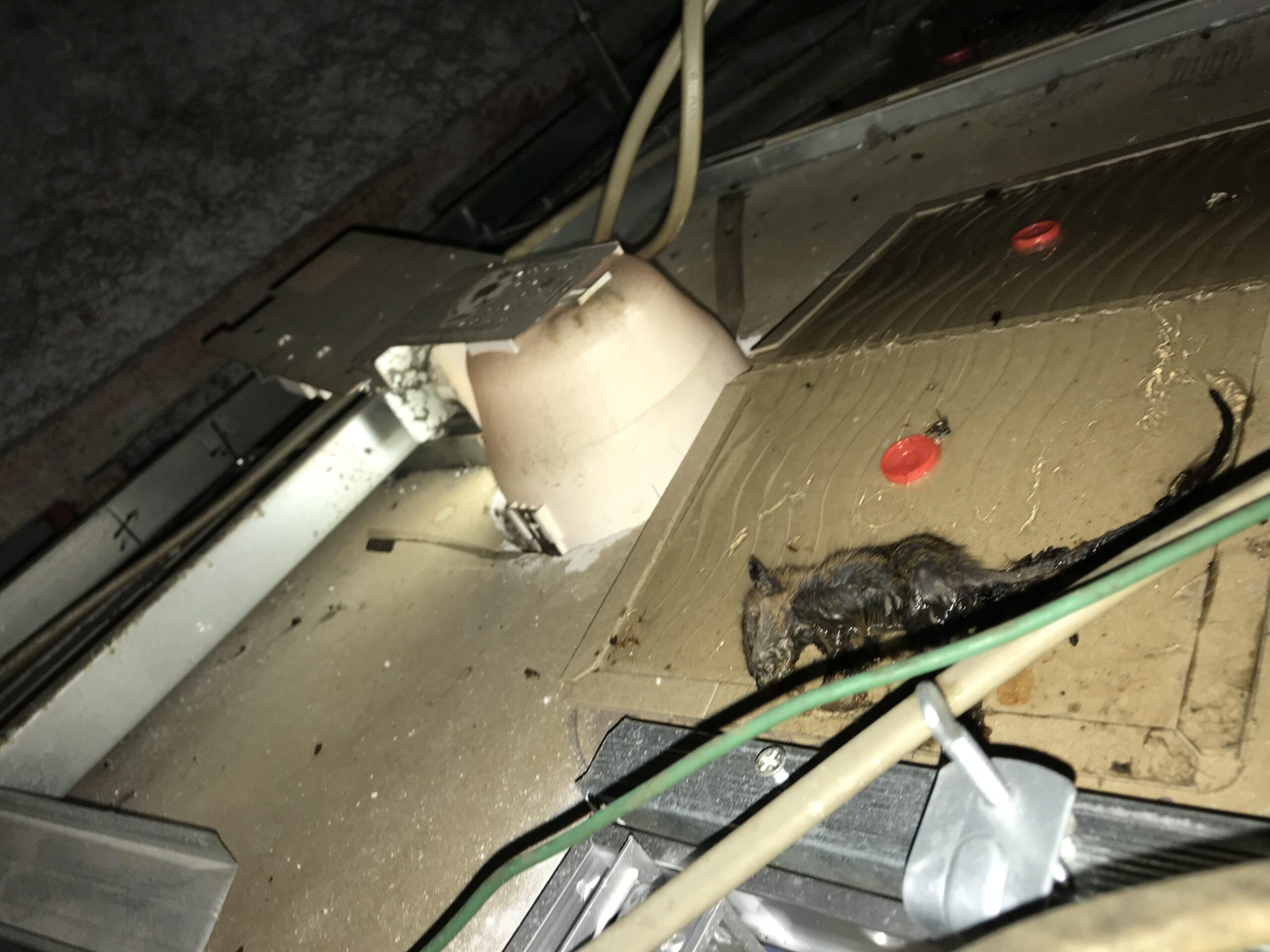 千葉県船橋市のⅯ様のネズミ駆除:施工後