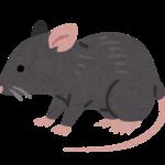 人間の家に住みついた野ネズミの物語~チュー太郎の暮らしと生涯