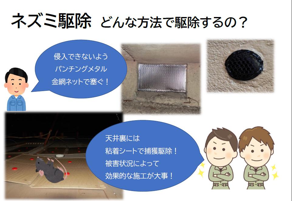ネズミの駆除はネズミが侵入できないようパンチングメタルや金網ネットで穴を塞いで、天井裏にはトラップを仕掛け粘着シートで捕獲する