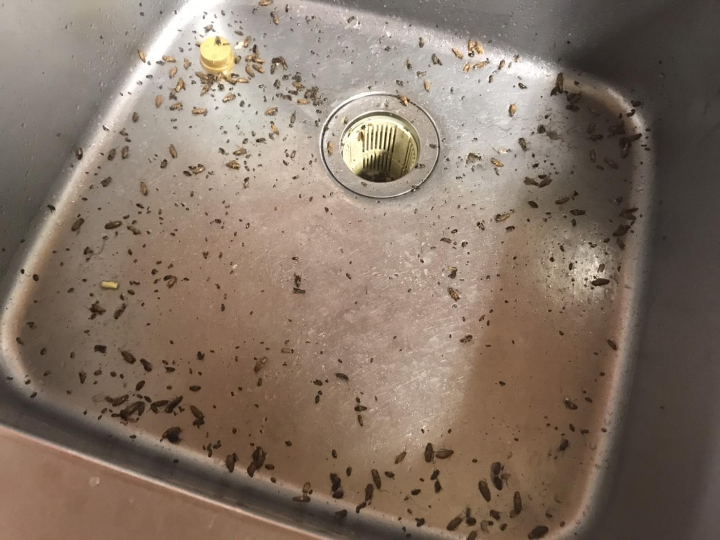東京都台東区の飲食店K様ゴキブリ駆除:施工後