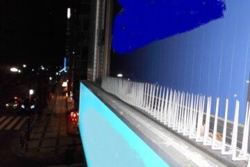 東京都葛飾区の店舗看板でのハト駆除