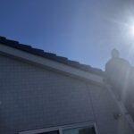 ハトが屋根にいる!被害に悩んでいる個人での駆除!鳩対策について専門家が解説