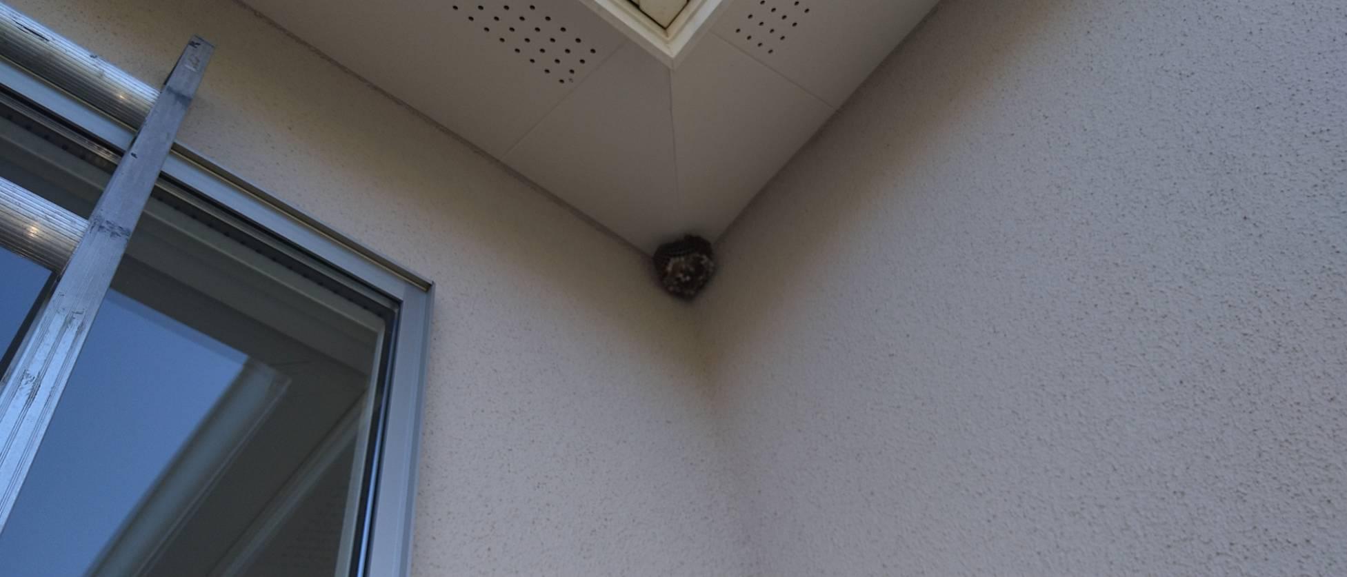 家の四隅に作られたハチの巣の様子