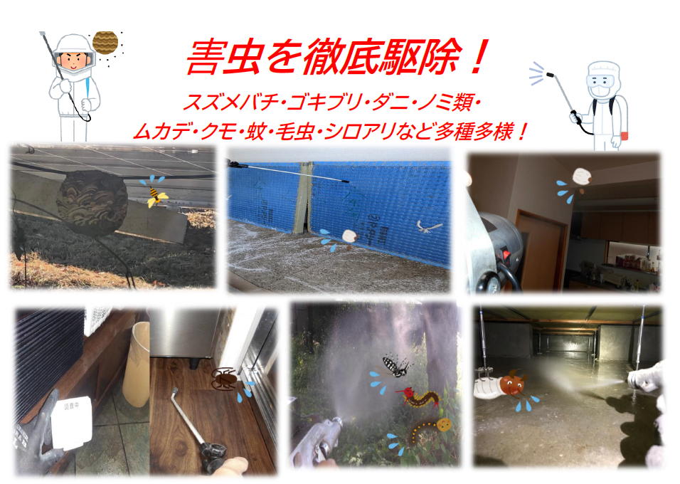 千葉・東京・茨城のノミ・ダニ駆除なら害虫駆除のクジョリアへお任せください。