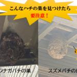 蜂にやってはいけない危険行為|刺された時の対処法と自分で退治する3つのリスク