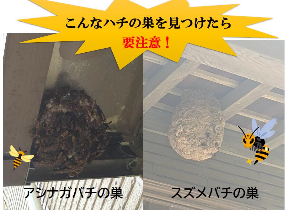 アシナガバチとスズメバチの巣の違い