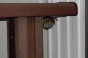 千葉県印西市のA様のハチ駆除