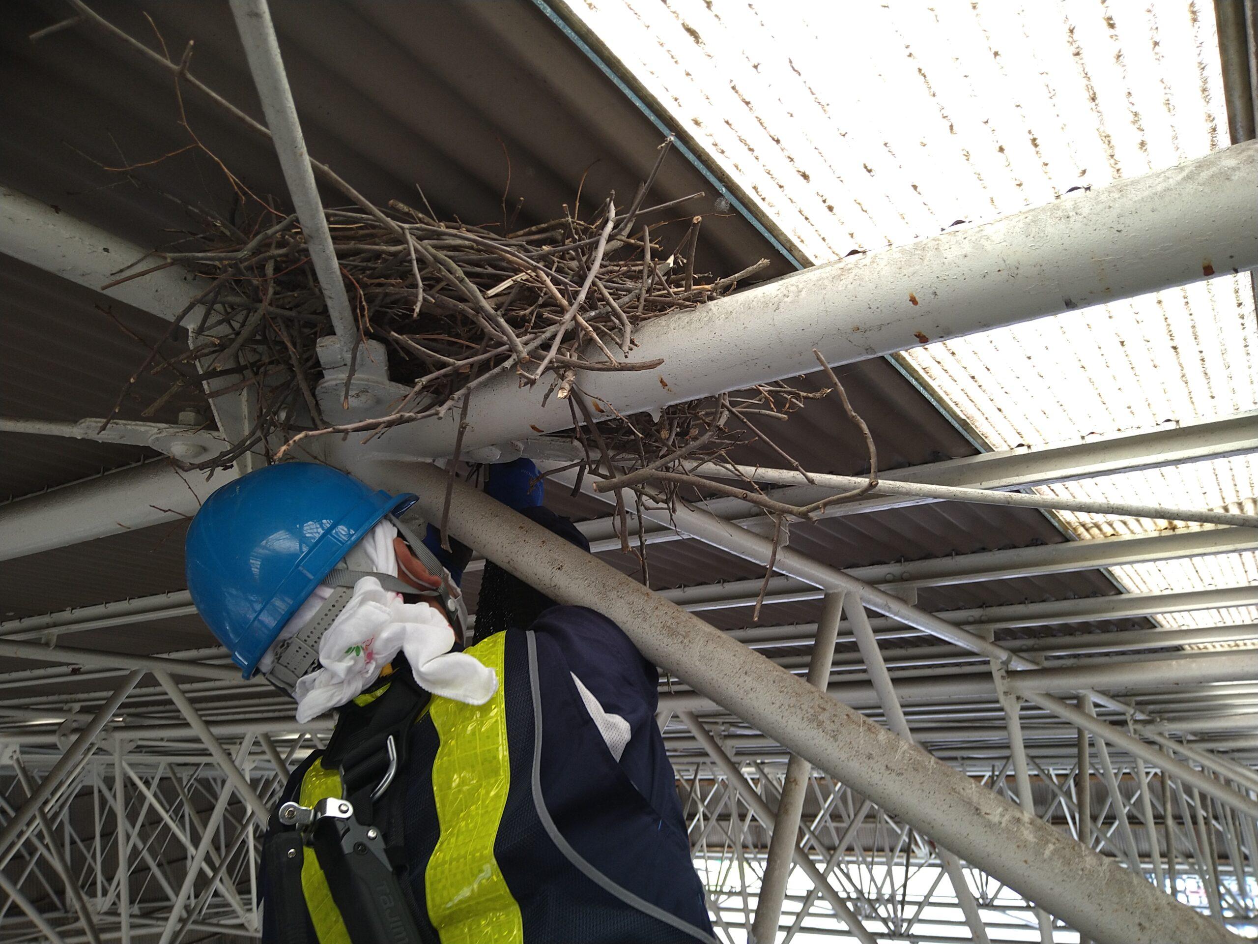 茨城県取手市のK様のカラス駆除:施工前