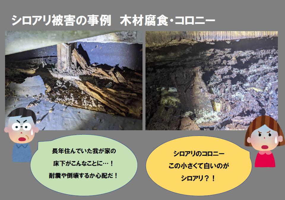 シロアリ被害事例。木材の腐食やコロニーが発生