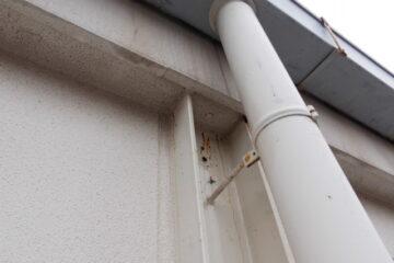 千葉県八千代市の店舗L様の蜂(ハチ)駆除