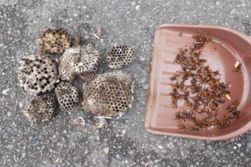 千葉県八千代市の店舗L様のハチ駆除