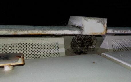千葉県習志野市のK様の蜂(ハチ)駆除:施工前