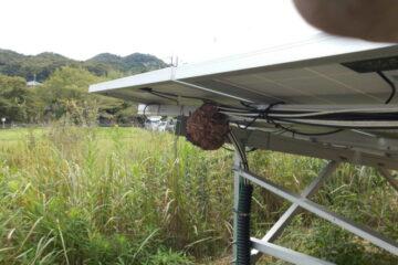 茨城県龍ケ崎市のR様のスズメバチの駆除