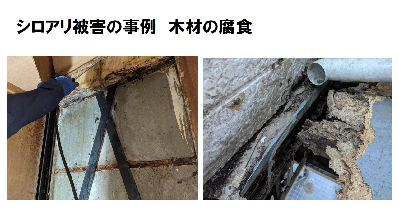 シロアリ駆除。木材腐食被害事例